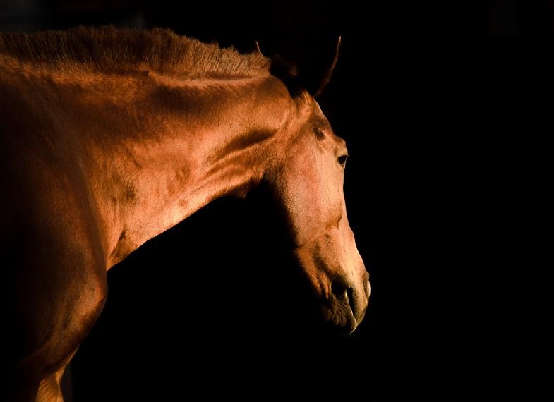 El caballo en la historia