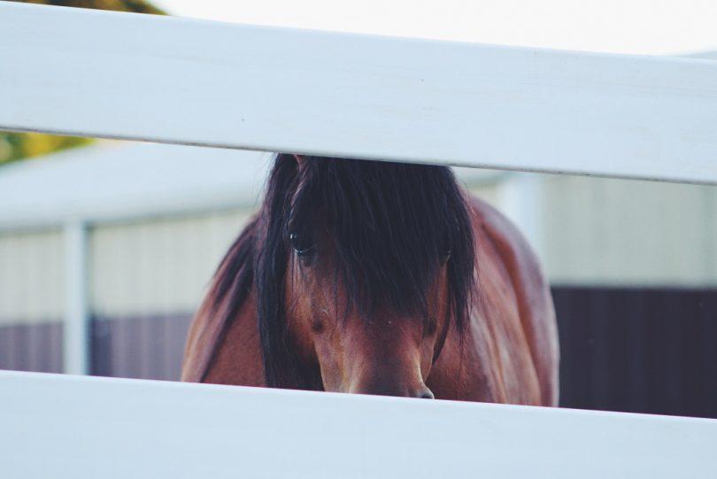 Los caballos y su relación con las personas