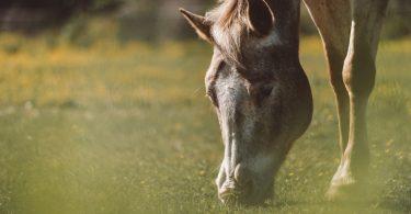 Algunos consejos para la alimentación equina de nuestros caballos