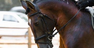 Música para realizar un buen entrenamiento en equitación