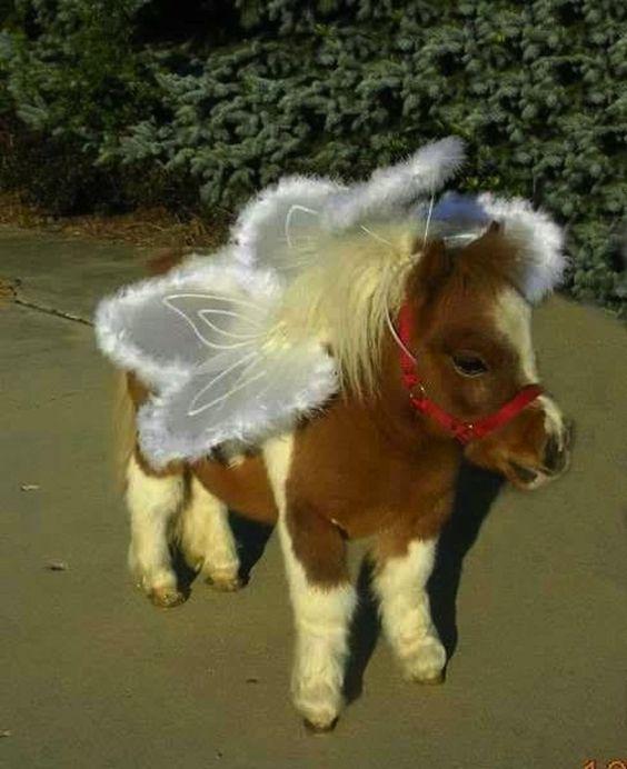 Disfraz para caballos de angelitos