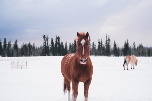 Cuidados básicos para nuestros caballos en invierno