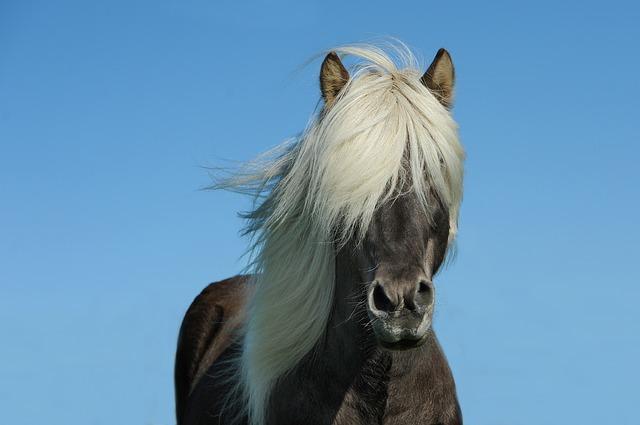 Frases sobre Equitación