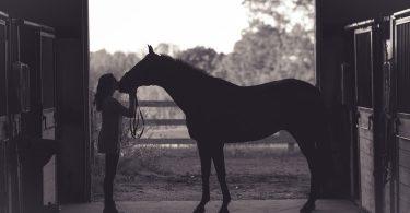 Regalos para aficionados a la equitación