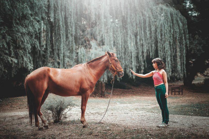 Las 10 mejores pelis sobre caballos