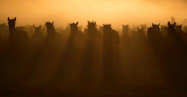 Adiestramiento del caballo basado en la confianza y el respeto recíproco